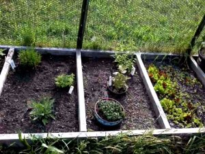 Herb Bed Squares
